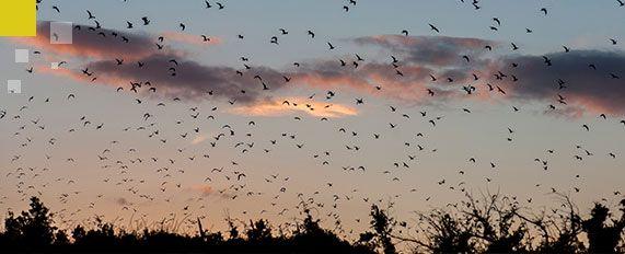 Interplaga - Control Aves