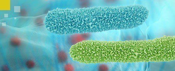 Interplaga - Microorganismos