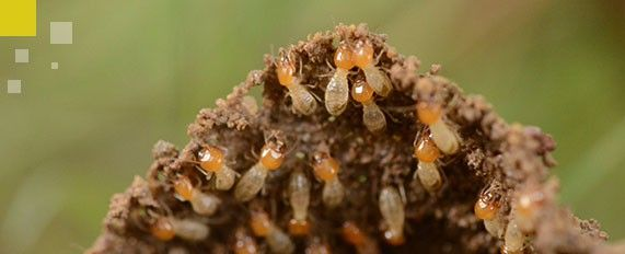 Interplaga - Tratamientos contra termitas