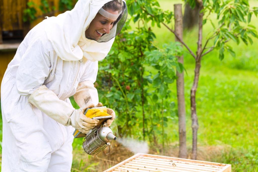 Especialistas en eliminar avispas